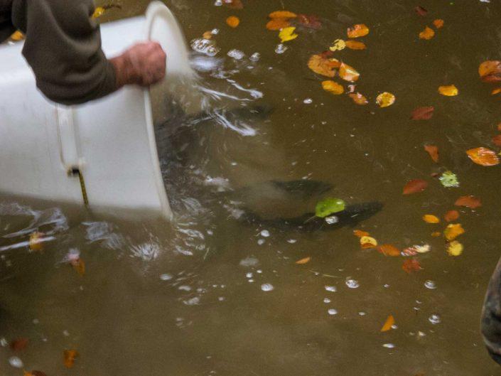 Fischbesatz